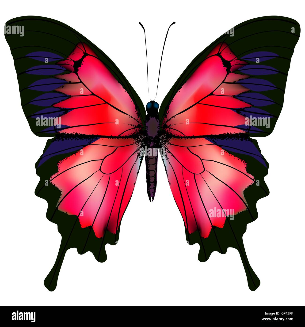 Butterfly. Vector illustration - Stock Image