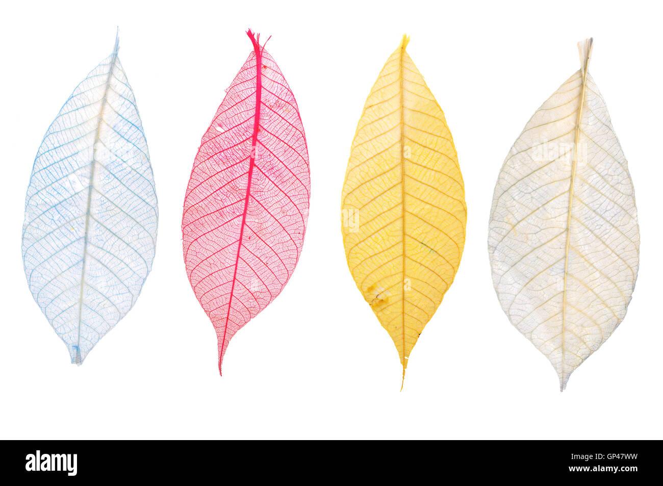 Transparent Leaf - Stock Image