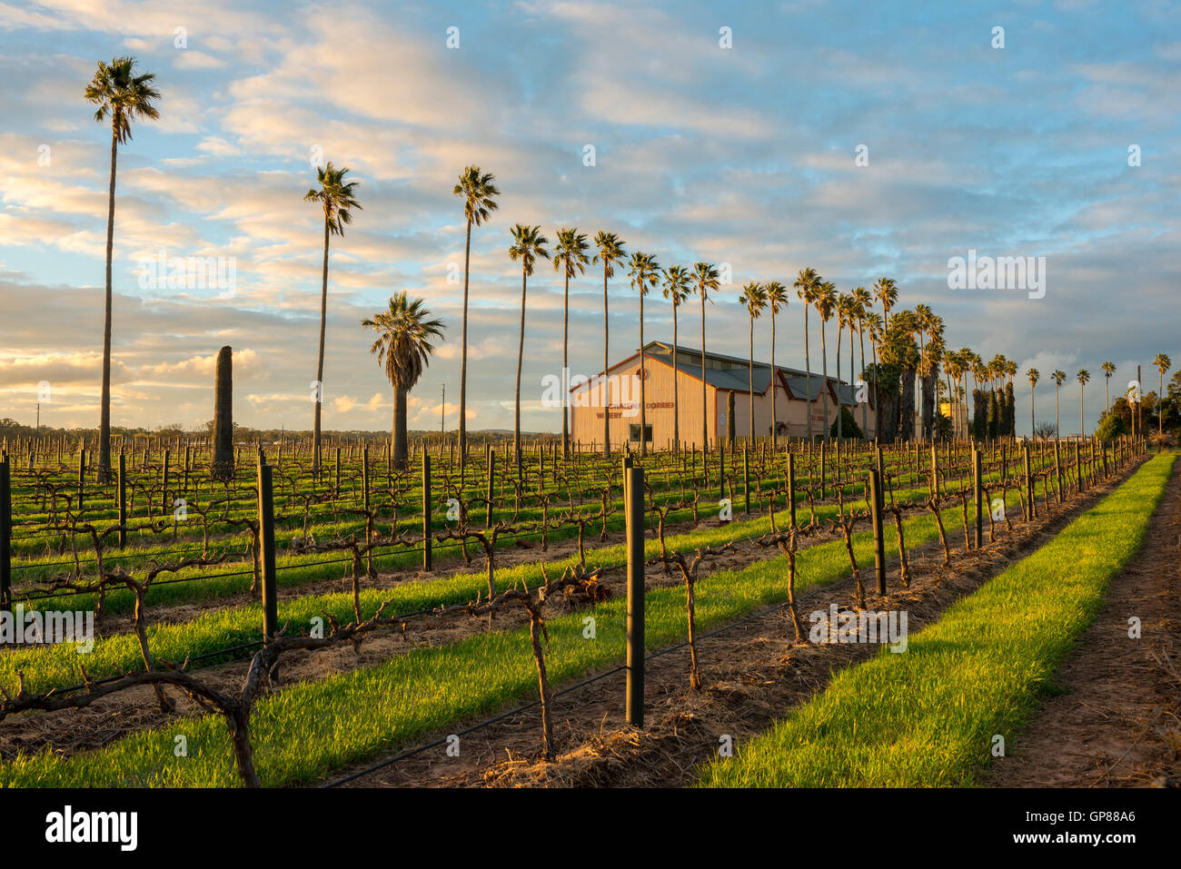 A Tanunda winery and vineyard at sunset in the Barossa Valley Australia - Stock Image