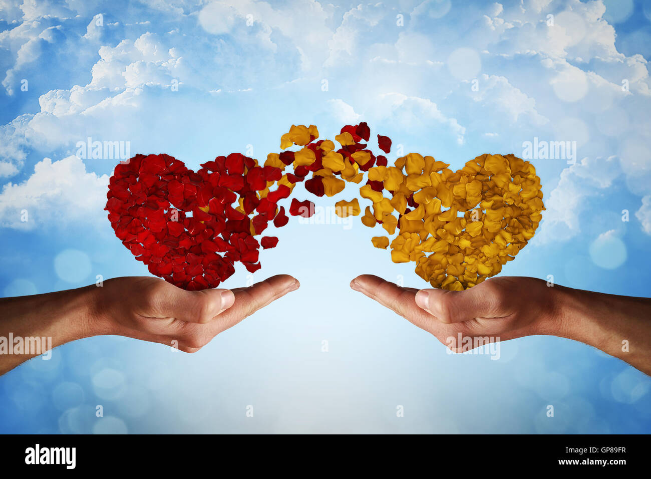 Two hands holding rose petal hearts. Romantic relationship concept. Attachment and love symbol, giving and exchange - Stock Image