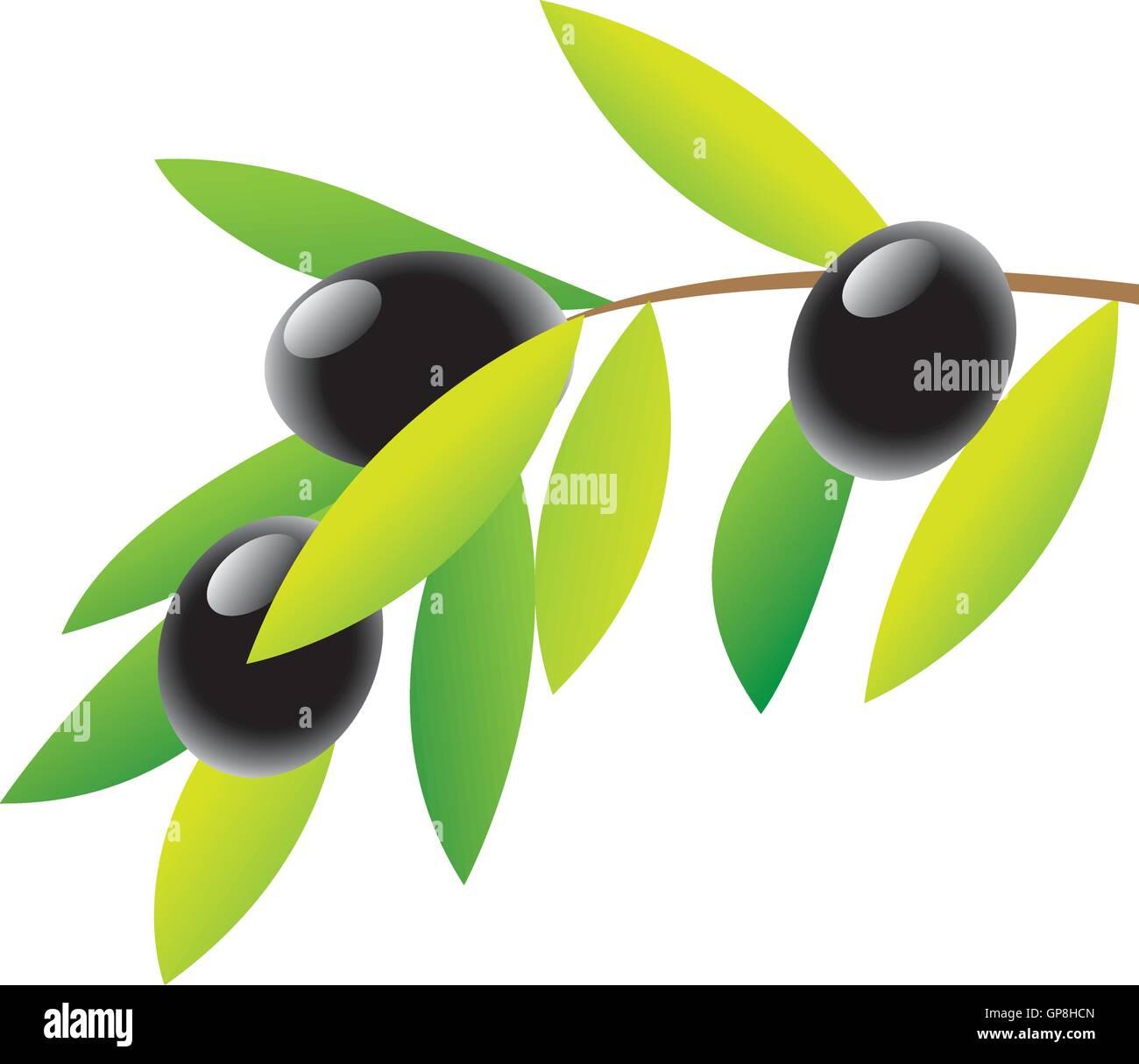 Black Olives Vector Vectors Stock Photos & Black Olives Vector ...