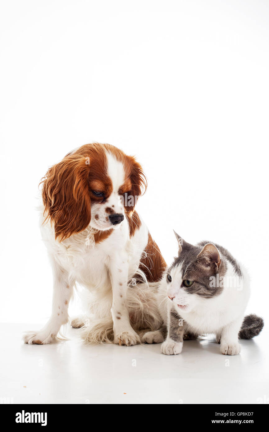 dog,vs,cat, with,together,friend,friends,group of pets, enemies or brothers. - Stock Image
