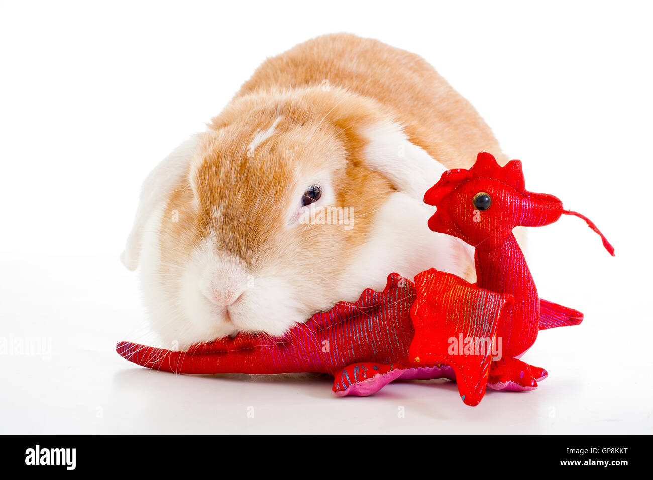 Wo eared bunny in white background studio play with red dragon toy wo eared bunny in white background studio play with red dragon toy cute beasutiful orange lop dutch rabbit widder nhd dwarf thecheapjerseys Gallery