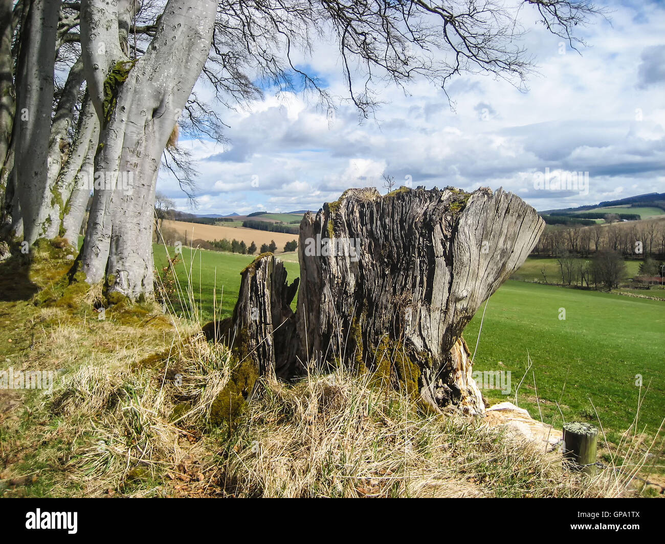 Remains of ancient tree with backdrop of beautiful Scottish Highlands rural scenery - Stock Image