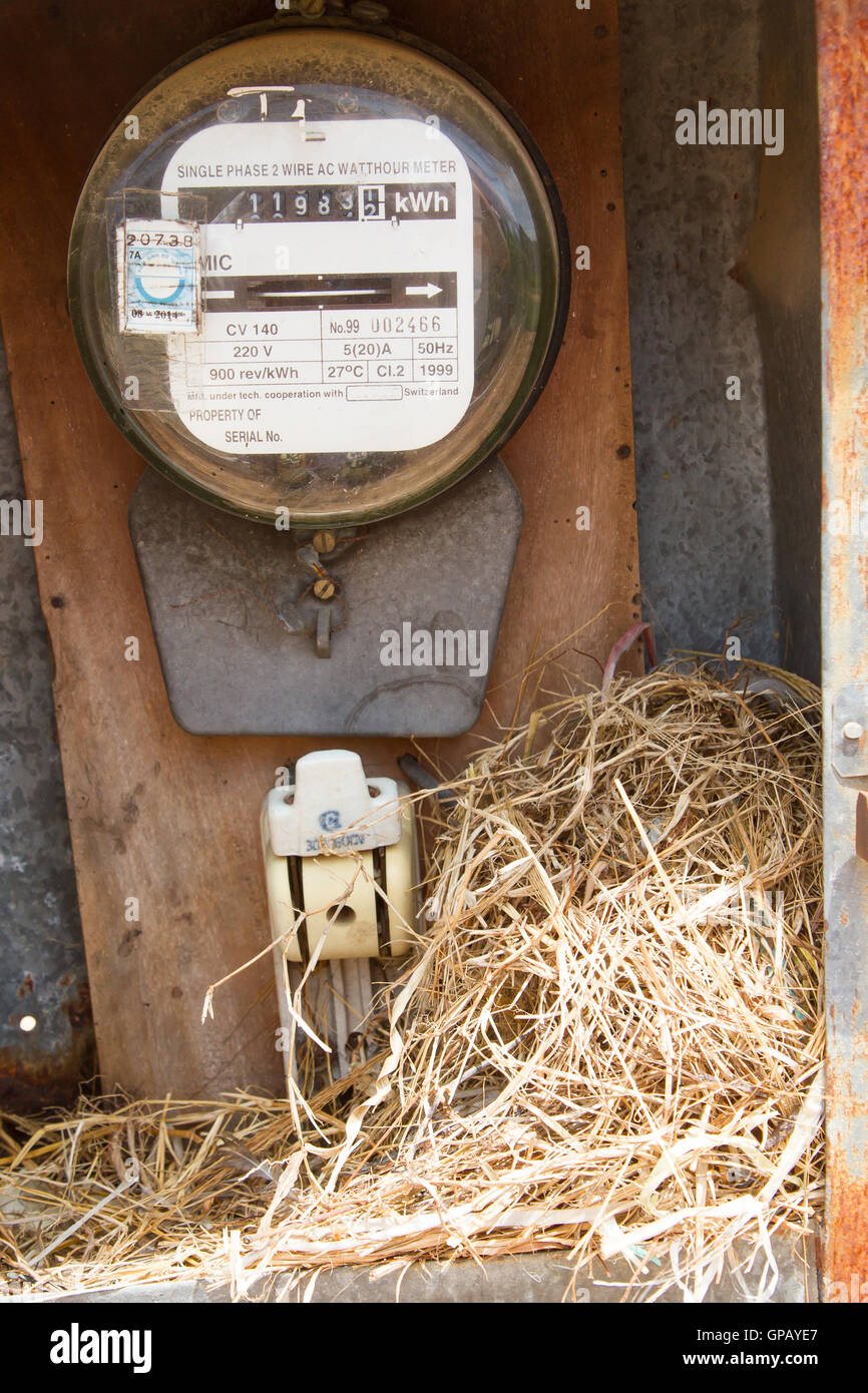 Nest of a sparrow in a cabinet with electrical meter - Stock Image