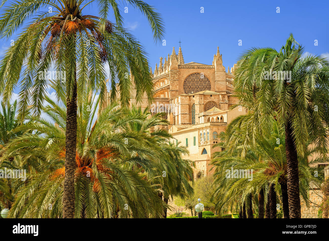 La Seu, the medieval gothic cathedral of Palma de Mallorca, in the palm tree garden, Spain - Stock Image