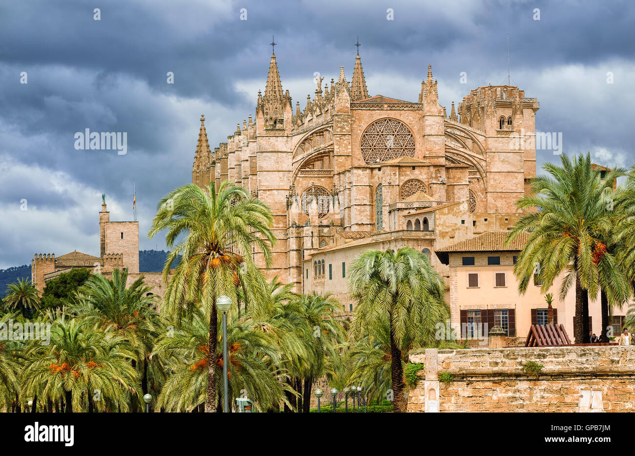 La Seu, medieval gothic cathedral of Palma de Mallorca, in the palm tree garden, Spain - Stock Image