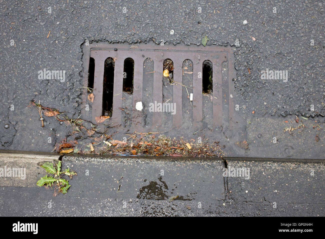 Drains blocked by leaves and mud and not cleaned out - Stock Image