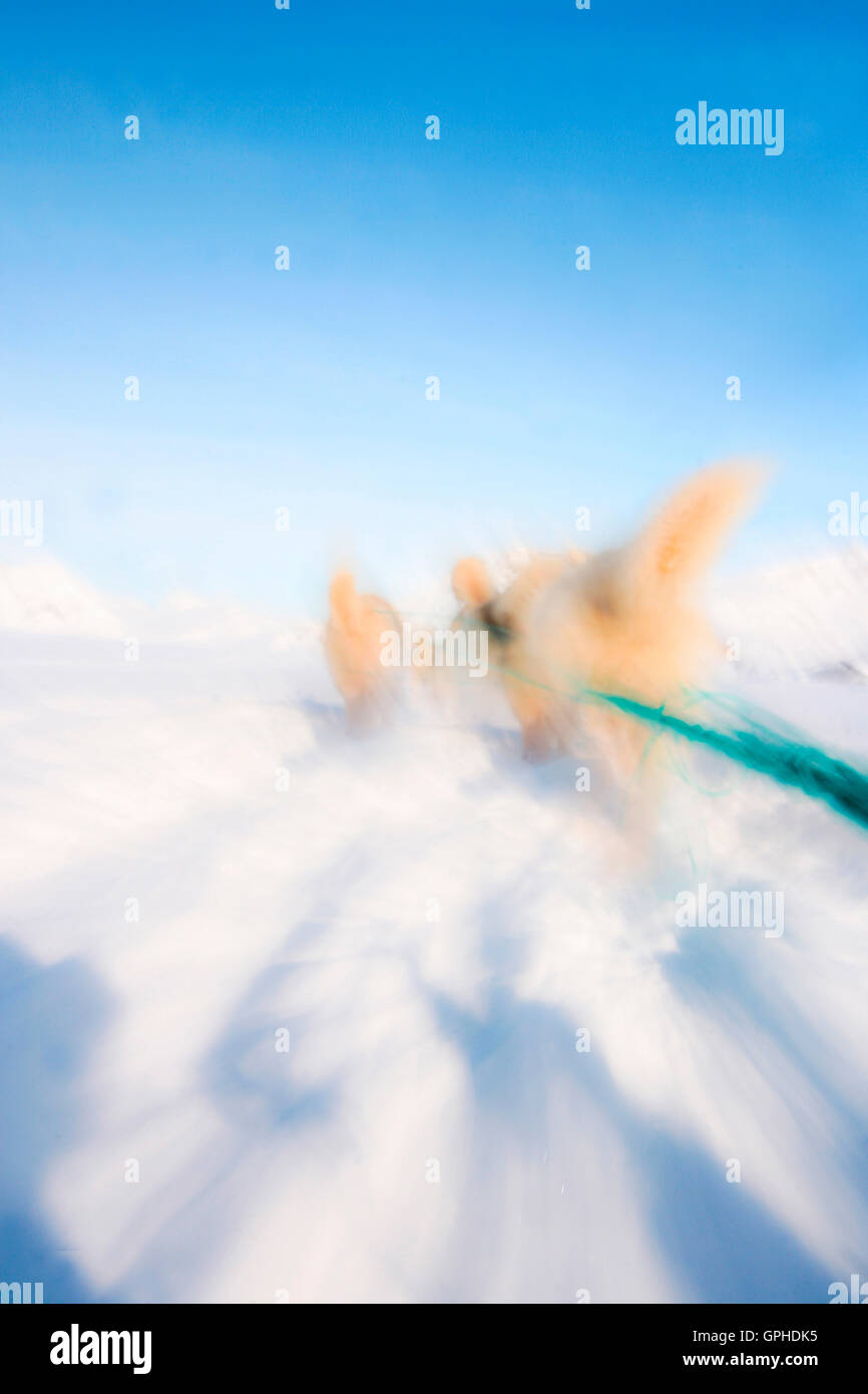 Sleigh in Kulusuk. Greenland. - Stock Image