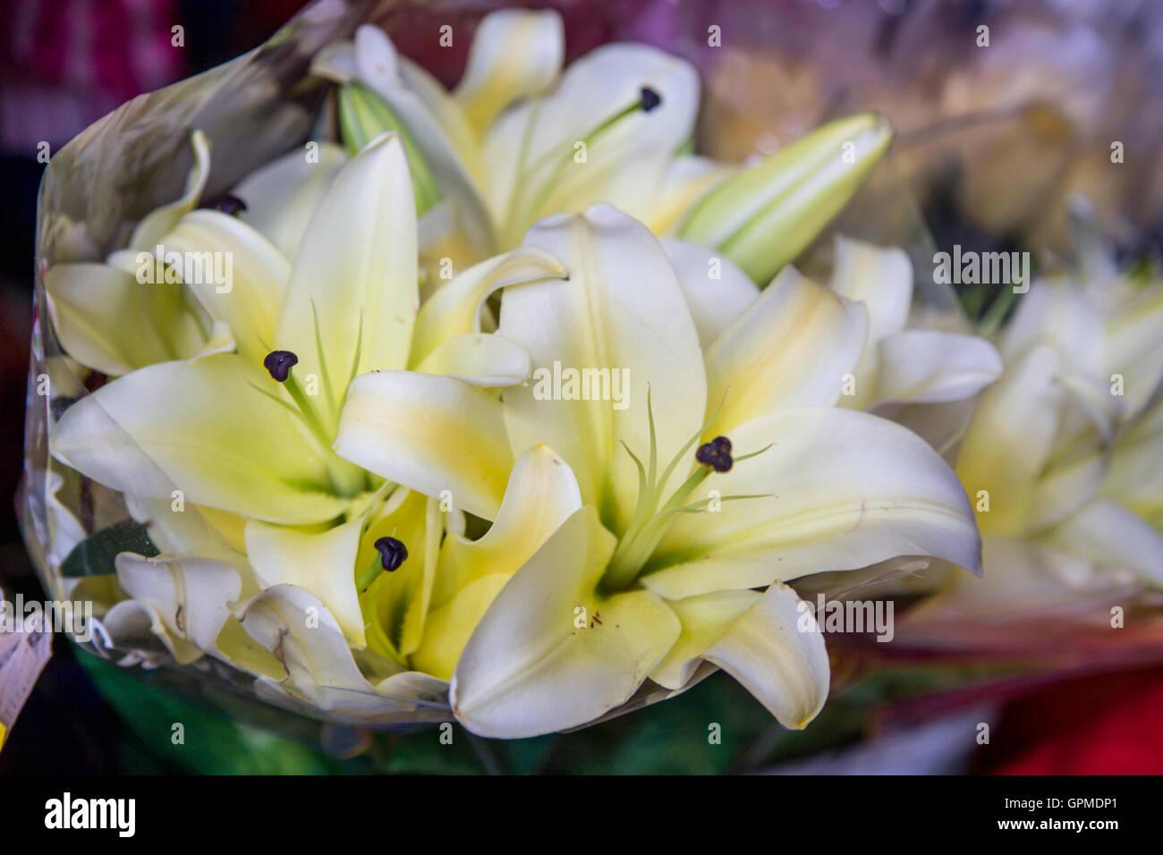 White Yellow Tropical Flowers Stock Photos White Yellow Tropical
