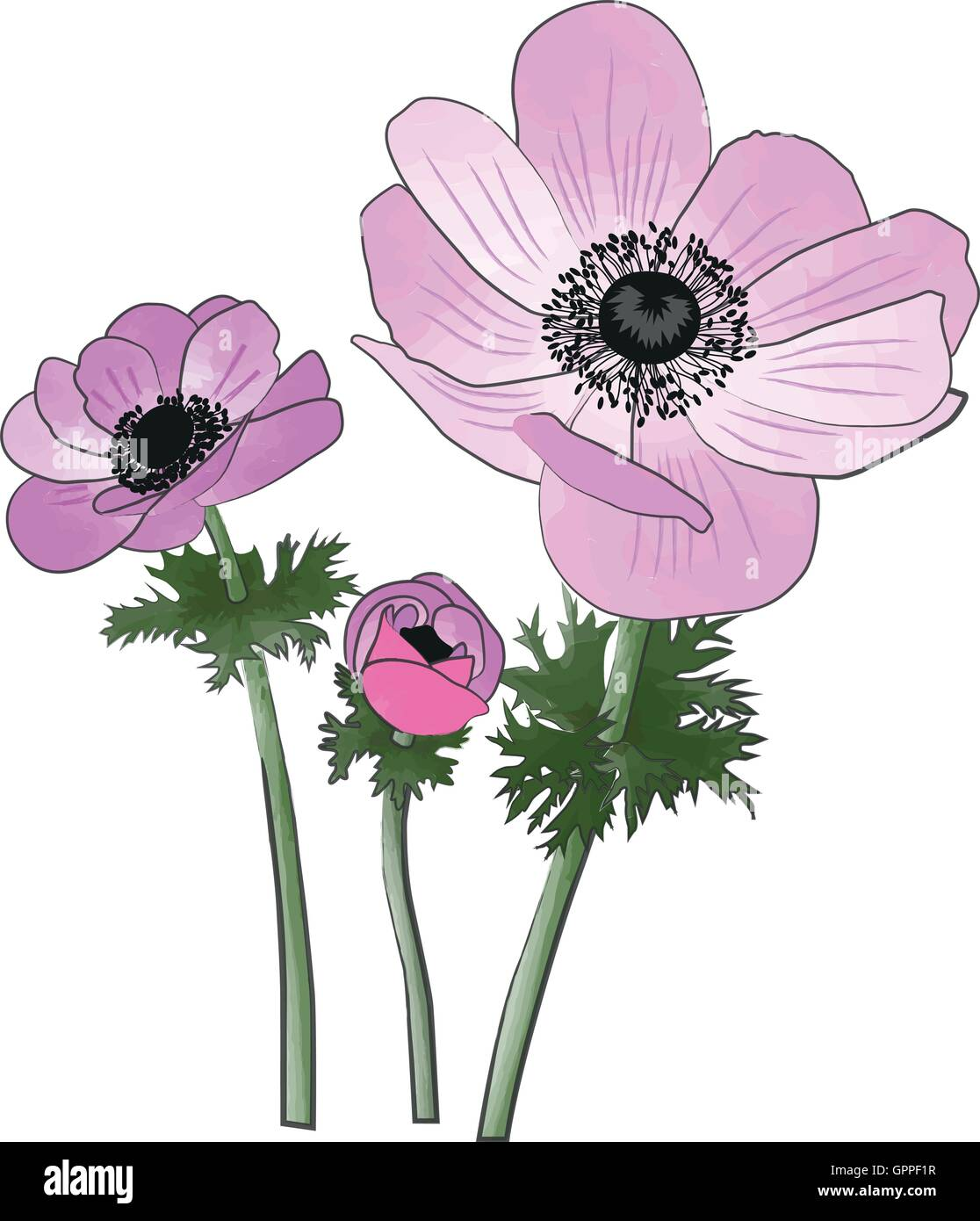 Anemones spring flowers watercolor and ink painting imitation - Stock Vector