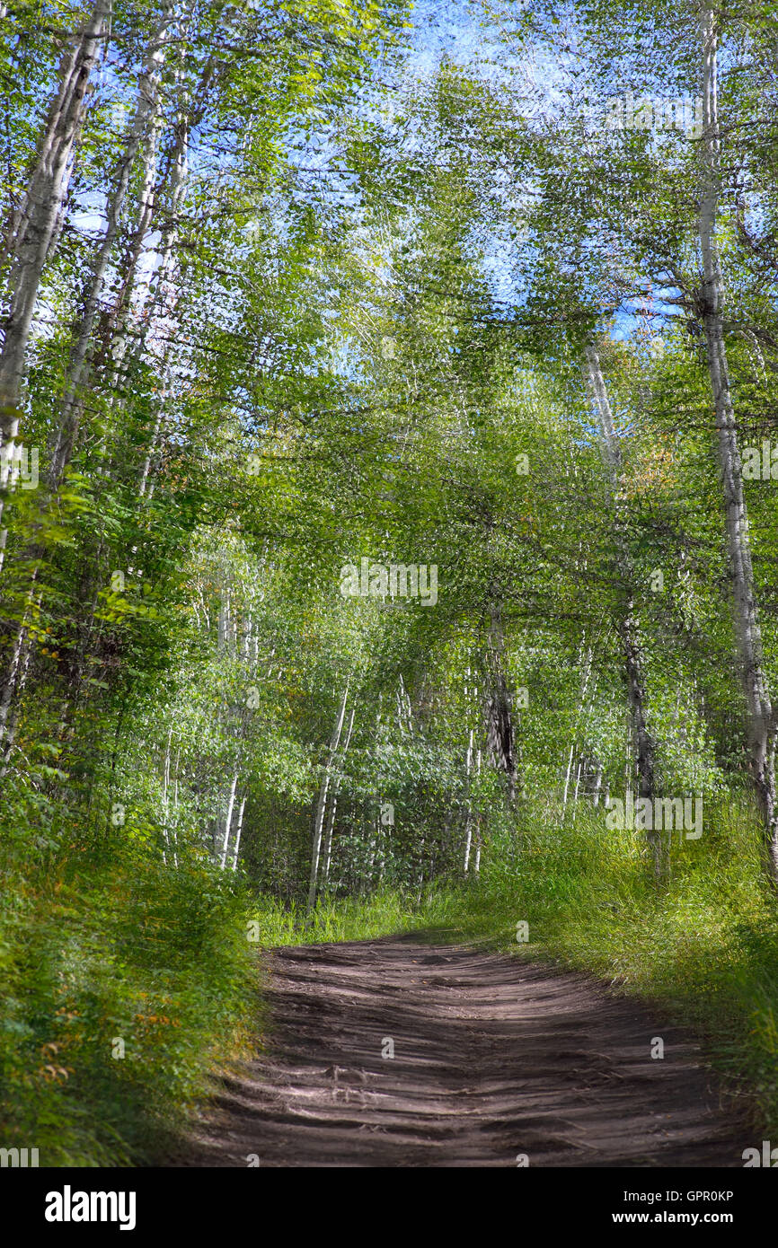 A fine art painterly image of summer trees. - Stock Image
