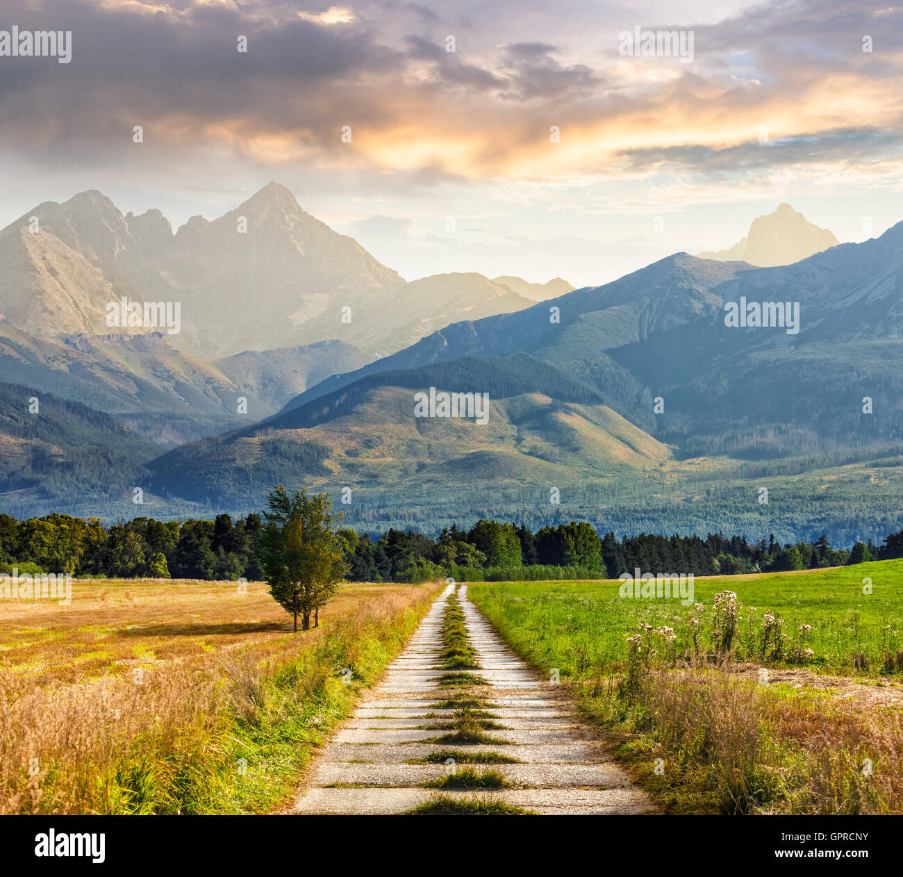 Composite Landscape image. Lonely trees near path through rural green fields to rocky peaks of mountains in evening - Stock Image