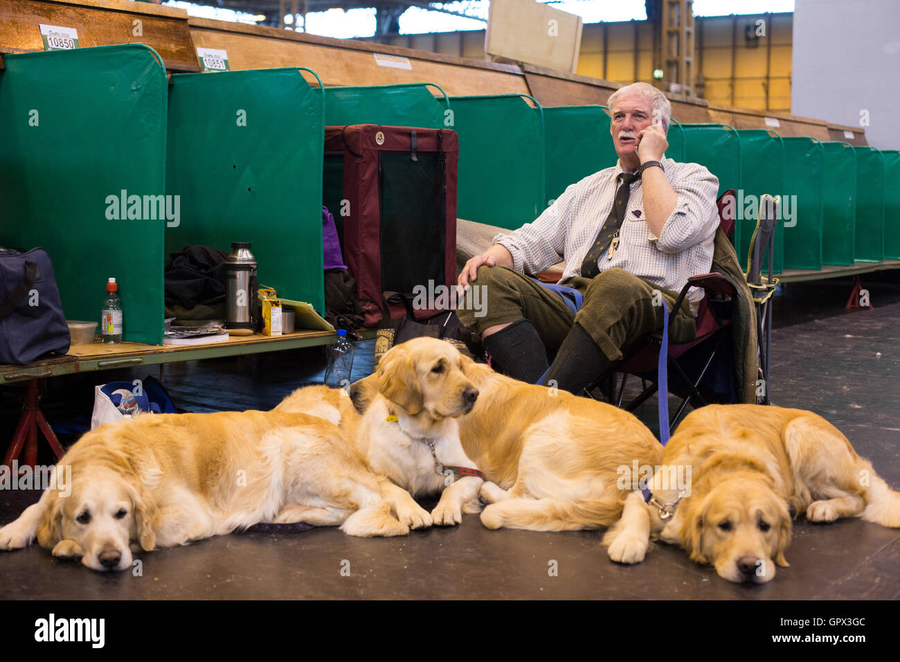 A dog breeder sits surrounded by his Labradors at Crufts