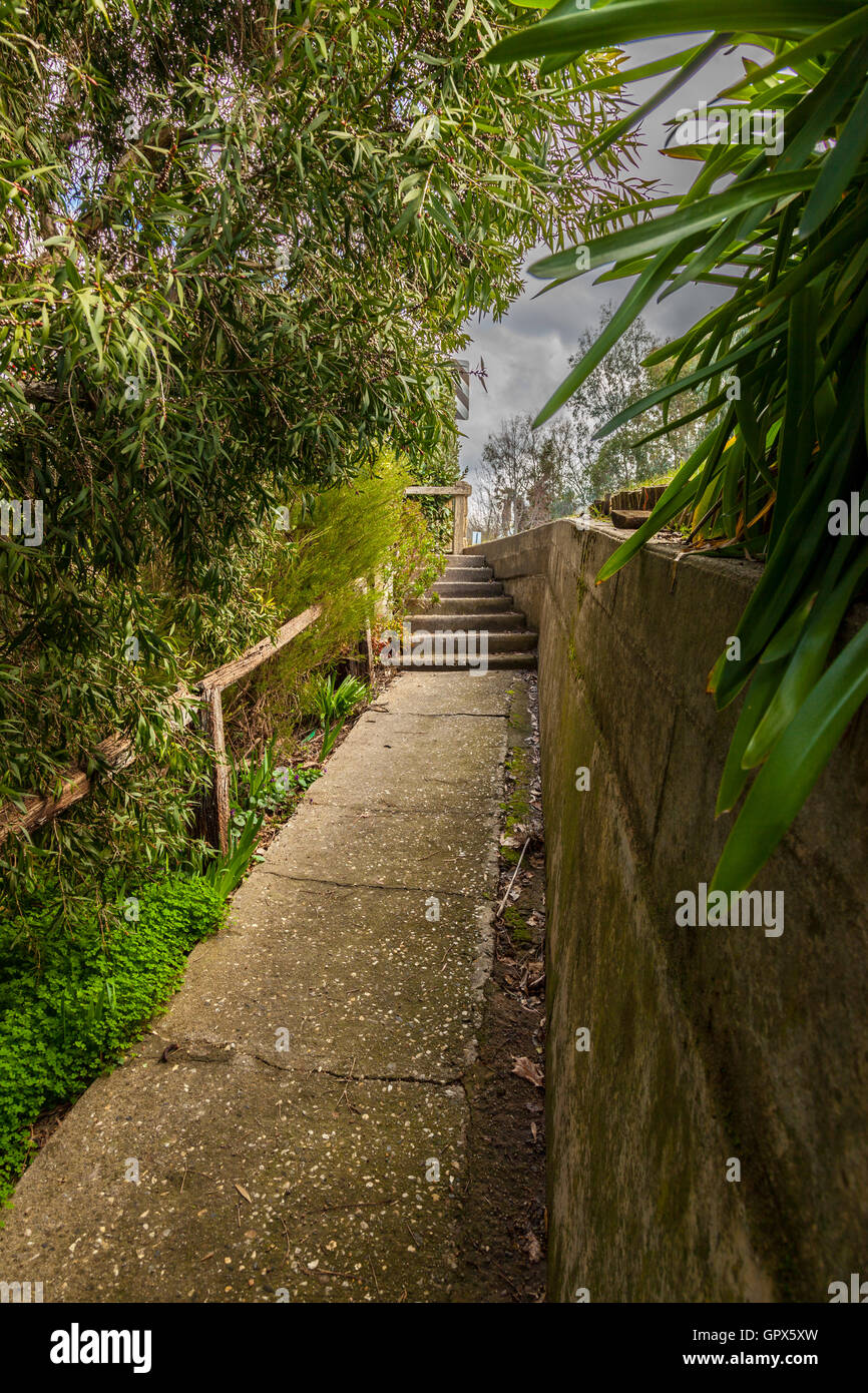 Concrete pathway in the shade of overgrown shrubs leading up to an open and bright area - Stock Image