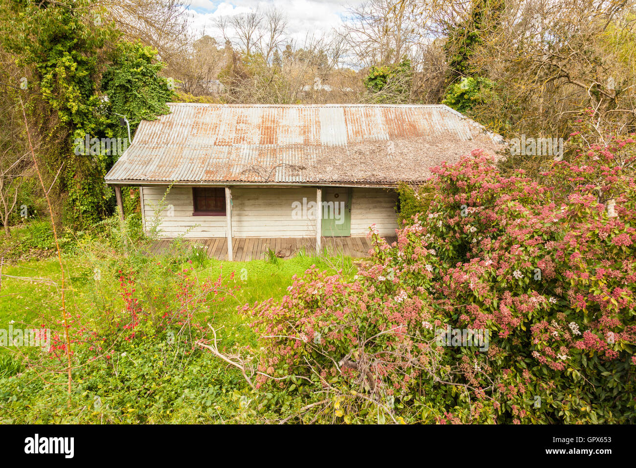 shabby timber dwelling, with iron roof, shaded veranda, overgrown shrubs and grass, aged, decaying family house. - Stock Image