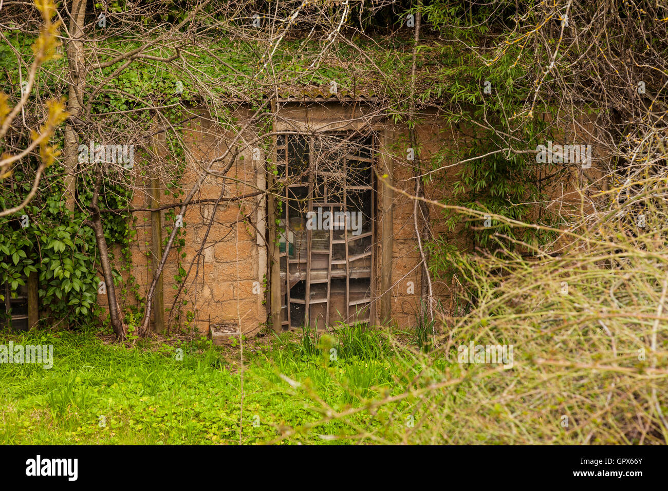 Hand built artists studio in the bottom of a gully covered with overgrown shrubs, long grass, artistic glass paneled - Stock Image