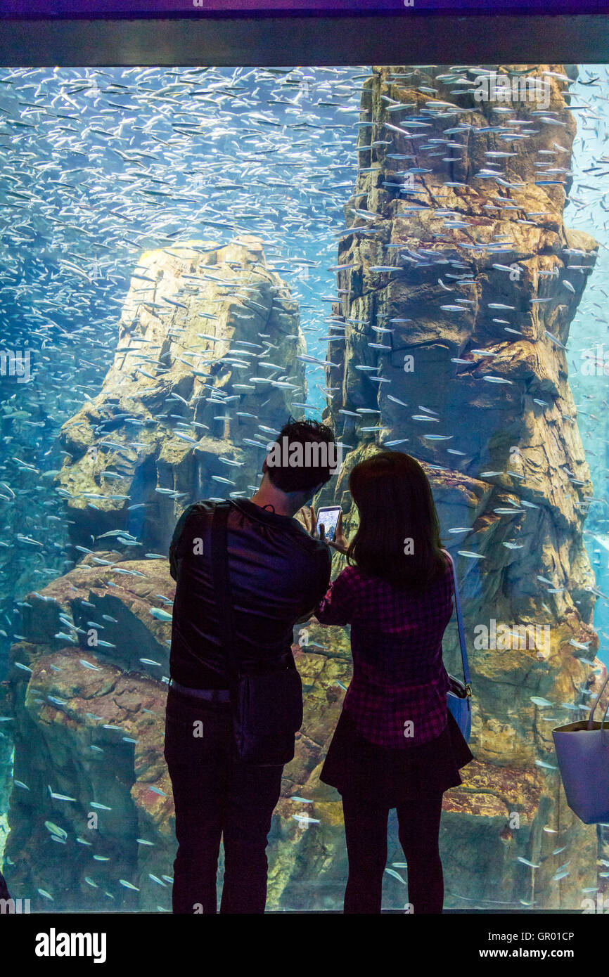 Japan, Osaka Aquarium, Kaiyukan. Interior. Young couple standing taking pictures of school of Japanese anchovies - Stock Image