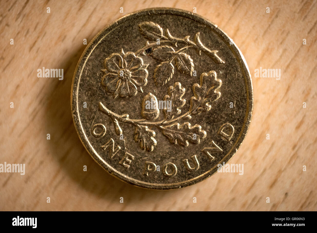 A 2013 British one pound coin, featuring the floral emblem of England, designed by Tiomthy Noad. - Stock Image