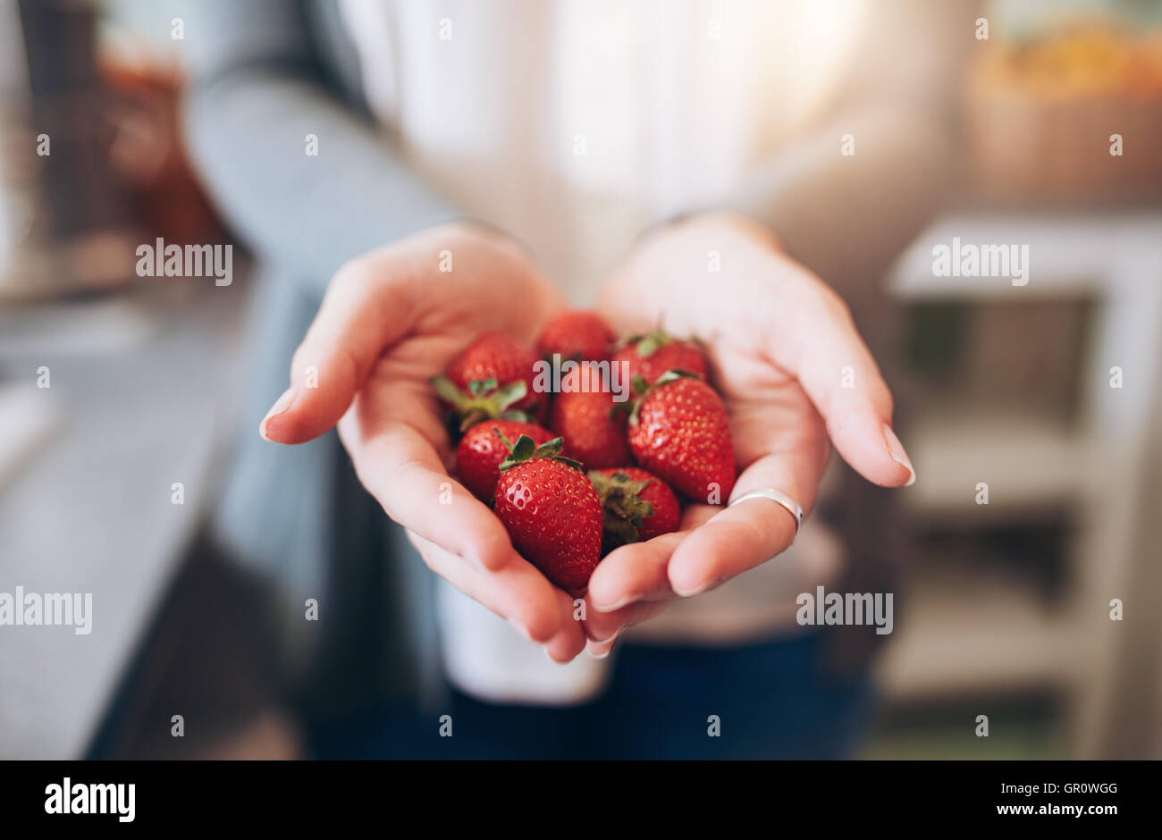 Cropped image a woman's hands holding a bunch of strawberries. Female holding a handful of fresh strawberries. - Stock Image