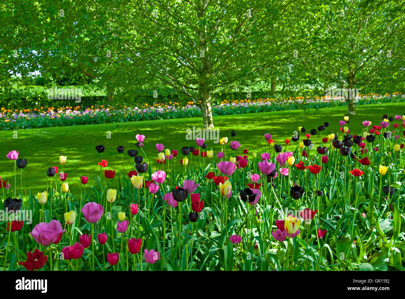 A pastoral scene with tulips at Keukenhof Gardens, Lisse, Holland - Stock Image