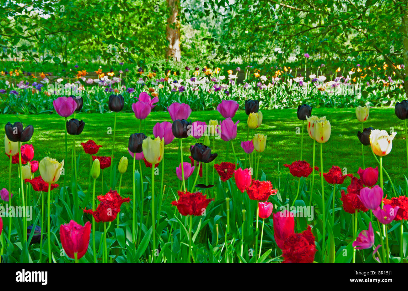 A view of the grounds with blooming tulips at Keukenhof Gardens, Lisse, Holland - Stock Image