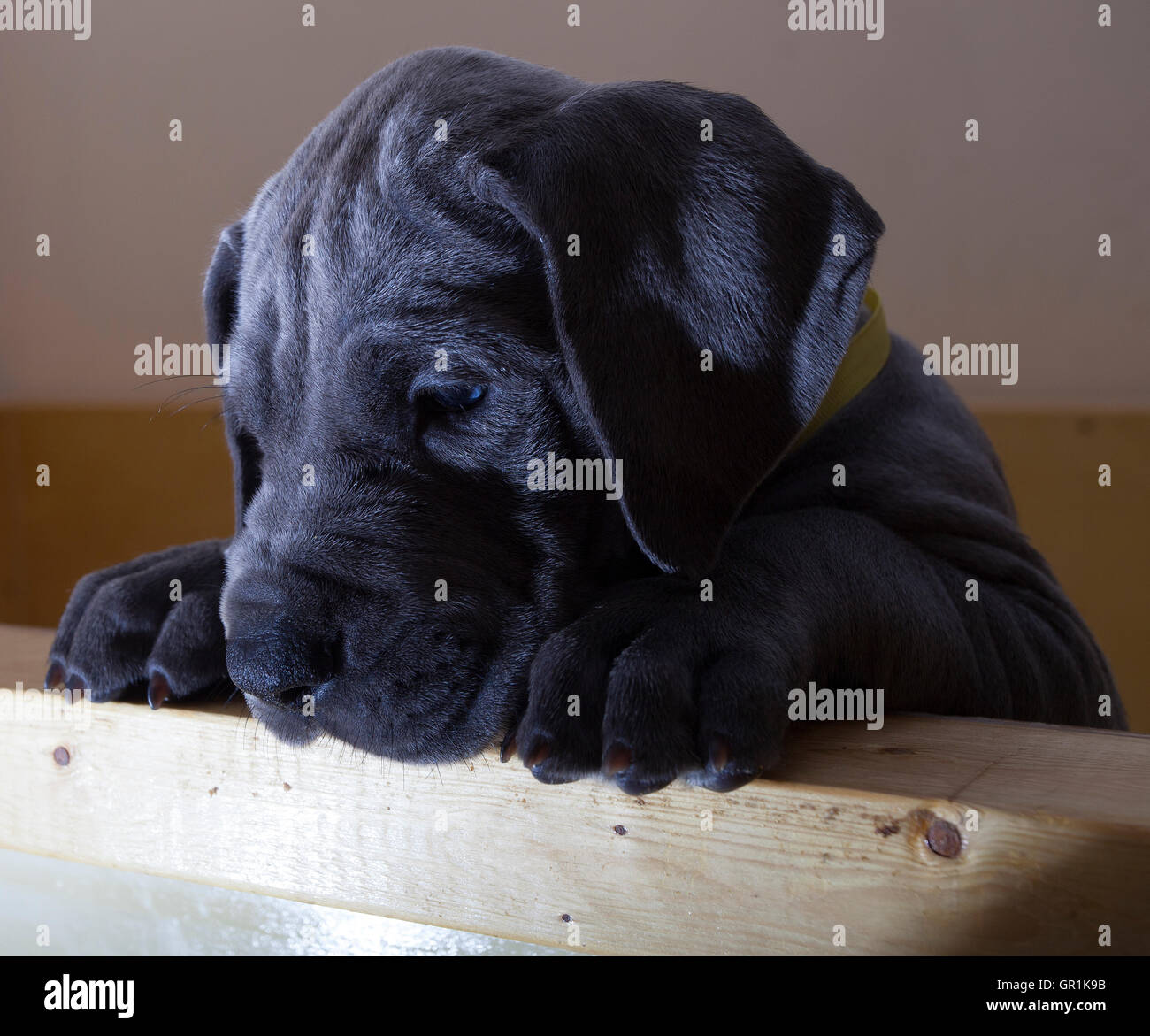 spotted puppy stock photos amp spotted puppy stock images