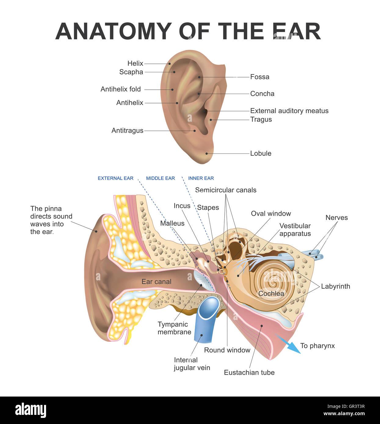 Parts Of The Ear >> The Human Ear Consists Of Three Parts The Outer Ear Middle Ear And