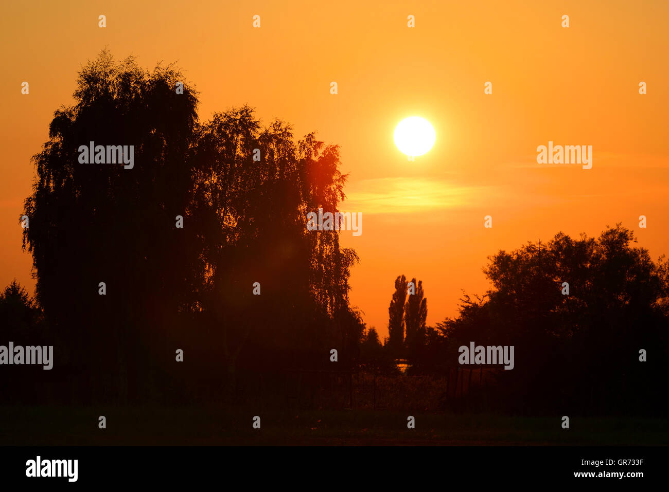 Sunset And Tree Silhouette In Hamburg, Germany - Stock Image