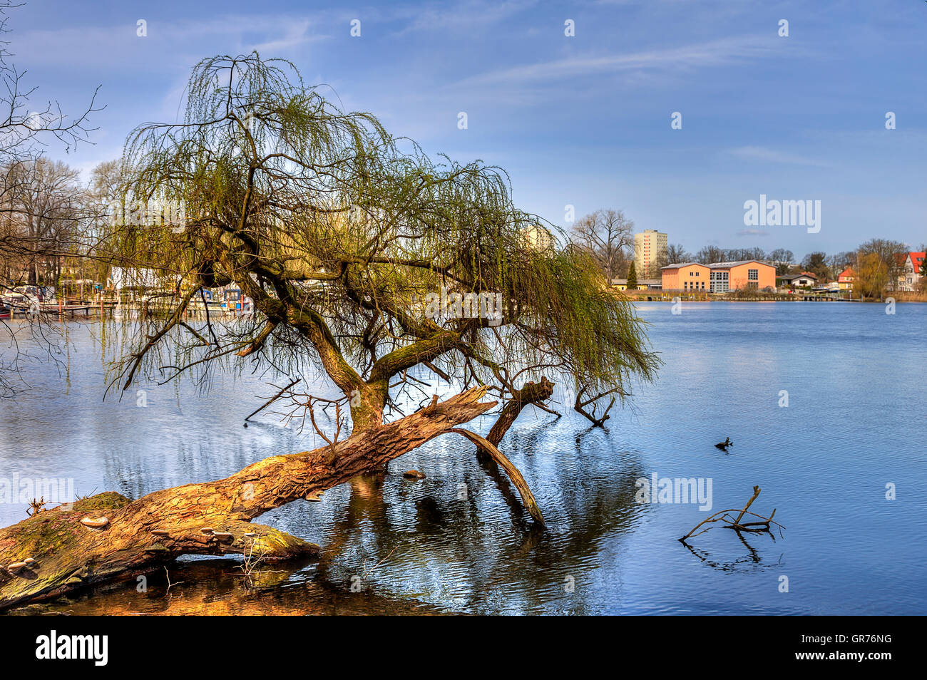 Tree In The Sea - Stock Image