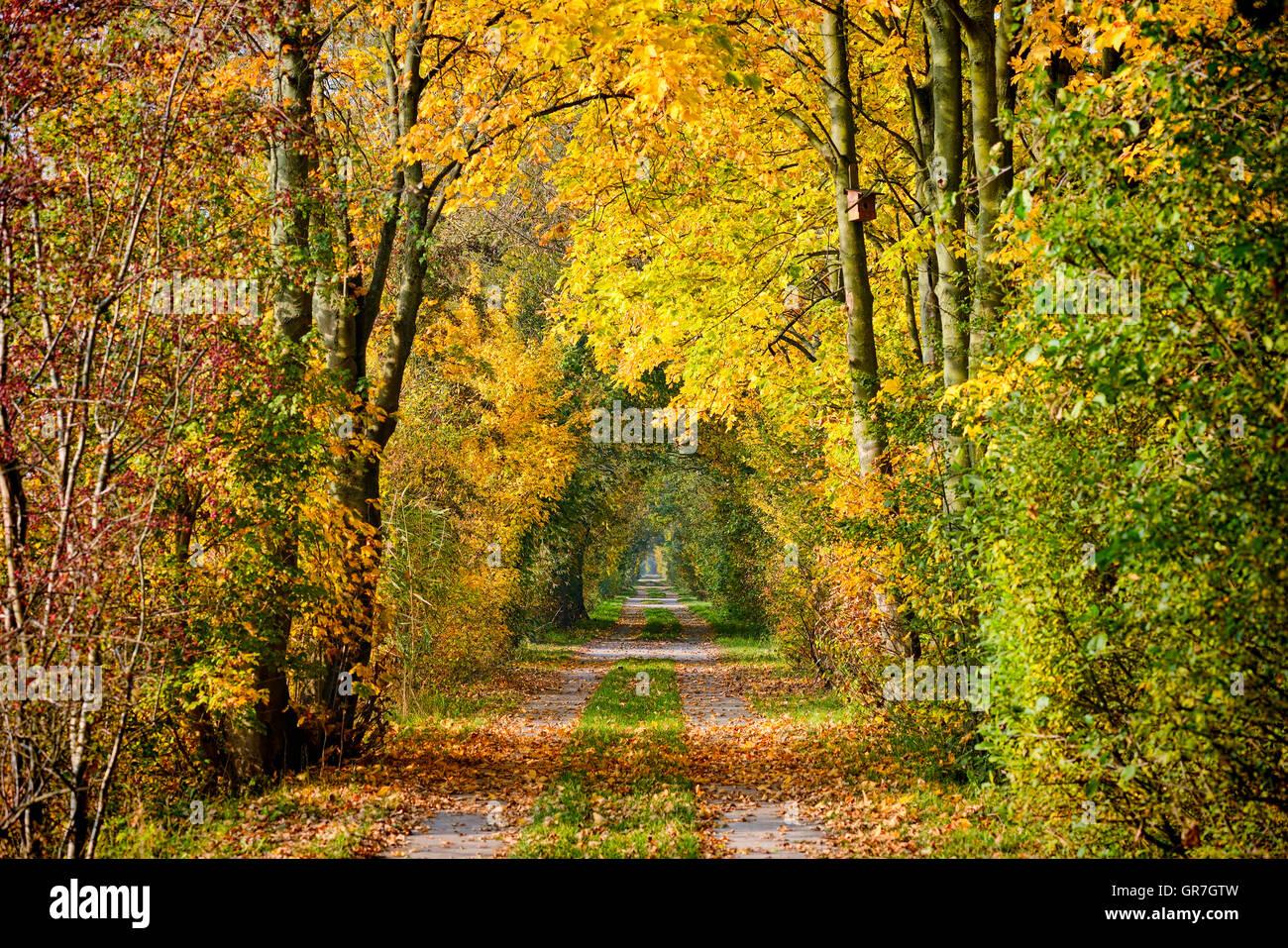Autumn Trees In Hamburg, Germany - Stock Image