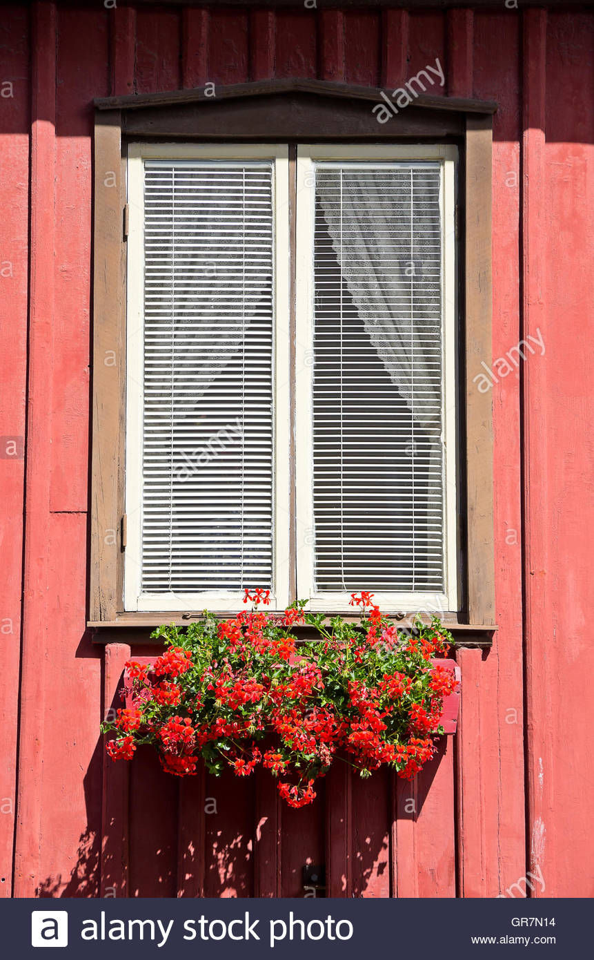 Red Flowers In The Window Box. - Stock Image