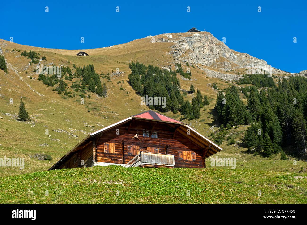 Summer At The Mountain Pasture Alp Oberniesen, Niesen, Bernese Alps, Switzerland - Stock Image