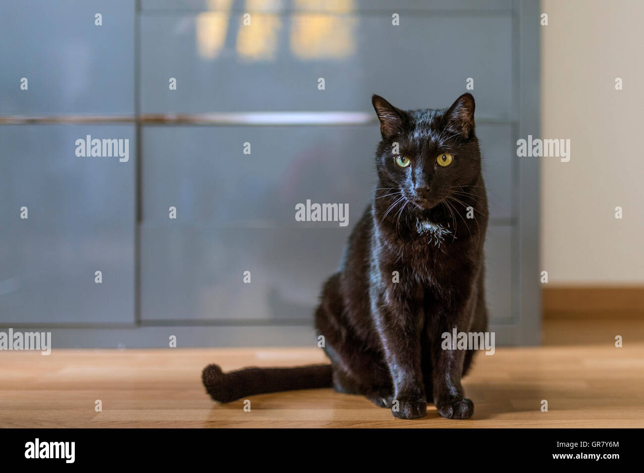 A Black Cat Sitting On The Floor - Stock Image