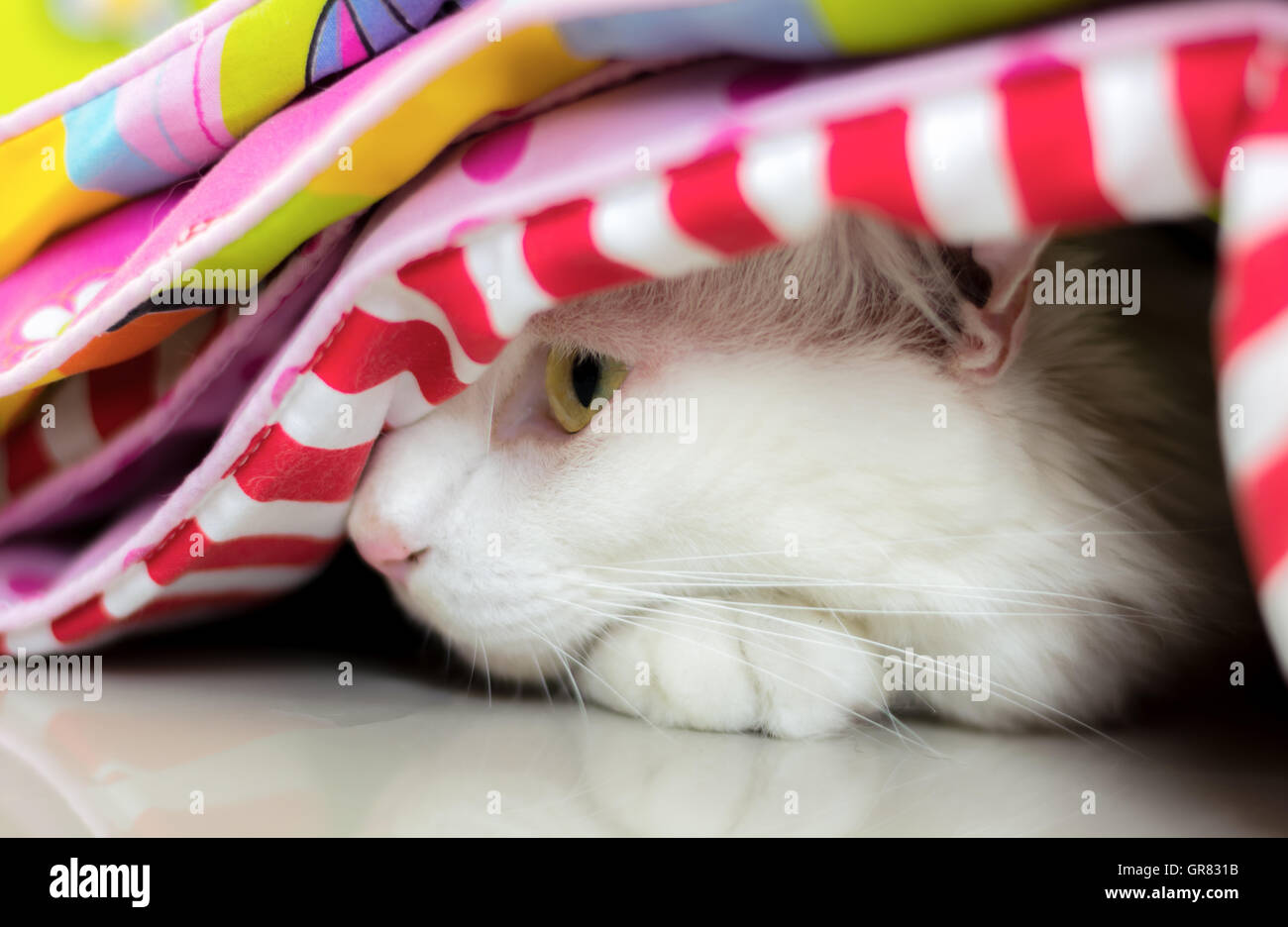 White cat is looking to the left side - Stock Image