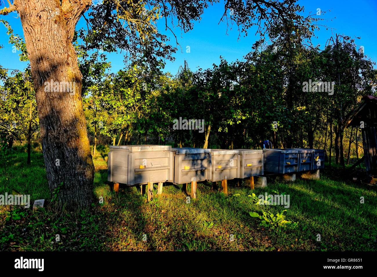 Mobile Apiary - Stock Image