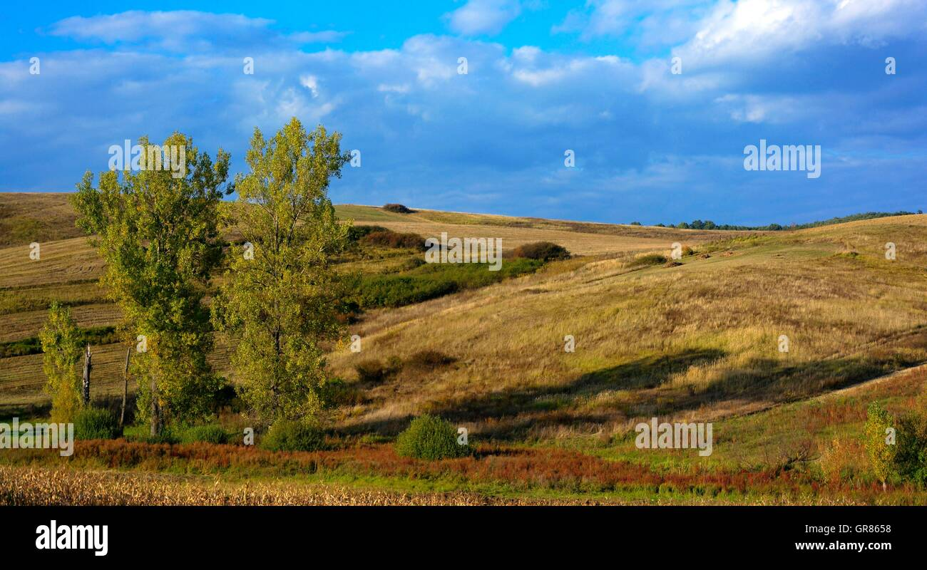 Aesthetic Landscape With Three Trees - Stock Image