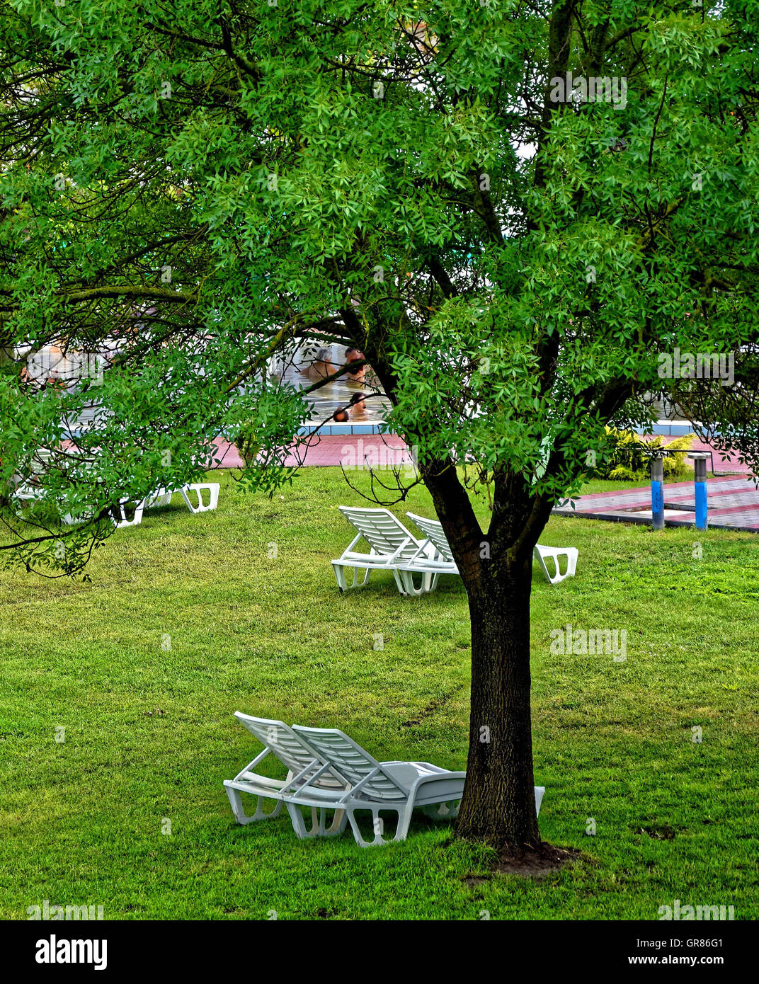 White Deck Chairs Under A Tree In The Pool   Stock Image