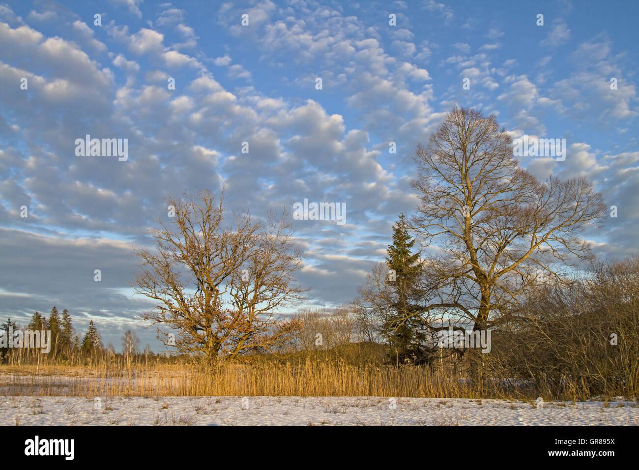 Eine Idyllische Moorlandschaft Im Voralpenland Bei Bad Tölz Stock Photo