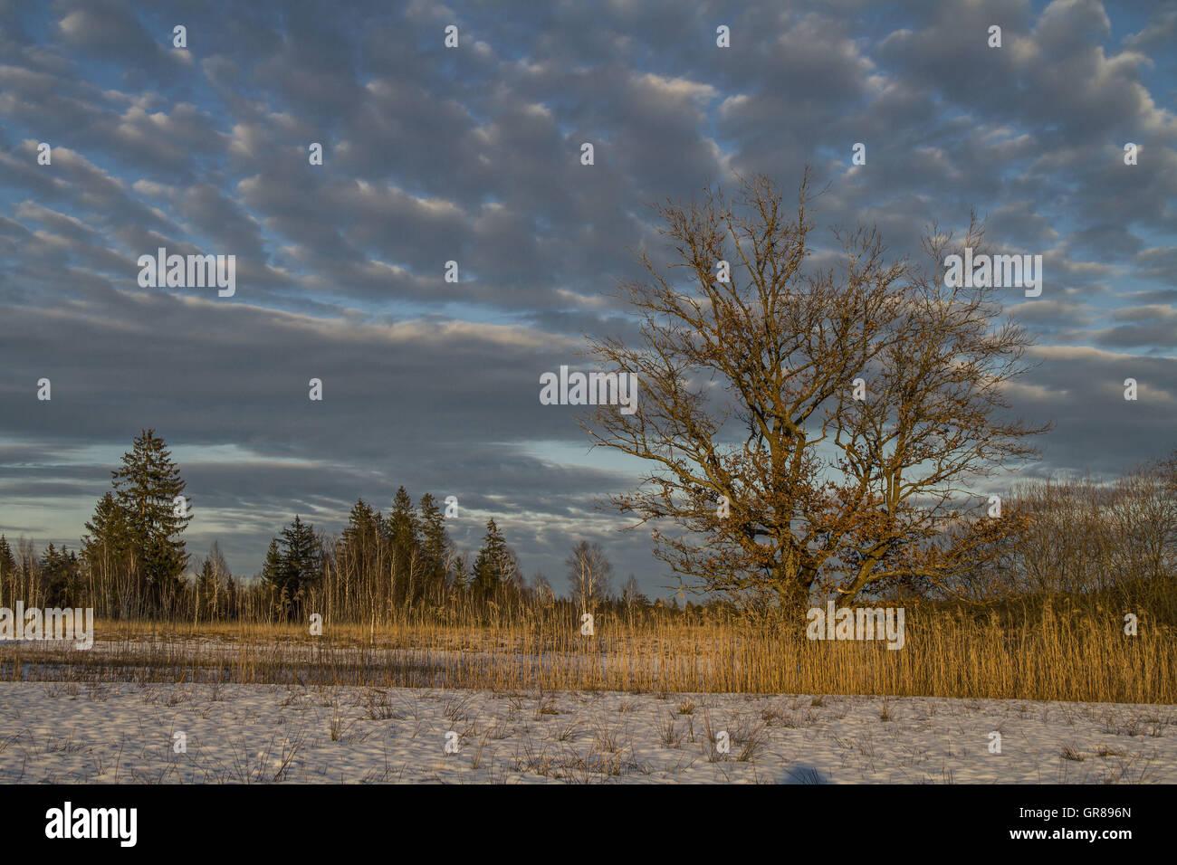Eine Idyllische Moorlandschaft Im Voralpenland Bei Bad Tölz - Stock Image