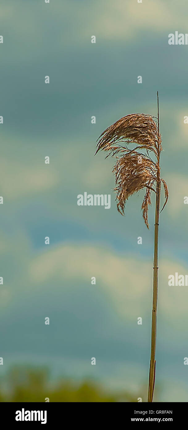 Wild plants - Stock Image