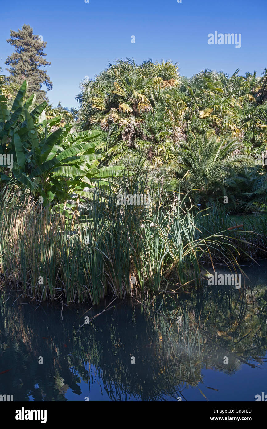 Jungle Feelings With Exotic Plants In An Italian Park - Stock Image