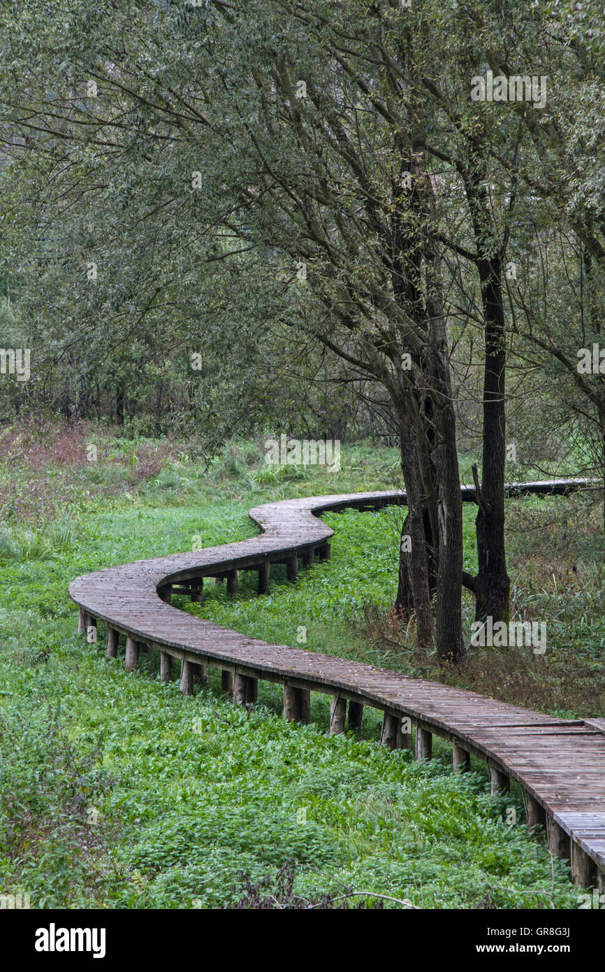 Dry Foot Can Be Reached By Means Of Wooden Walkways Through The Idyllic Biotope On Terlagosee - Stock Image