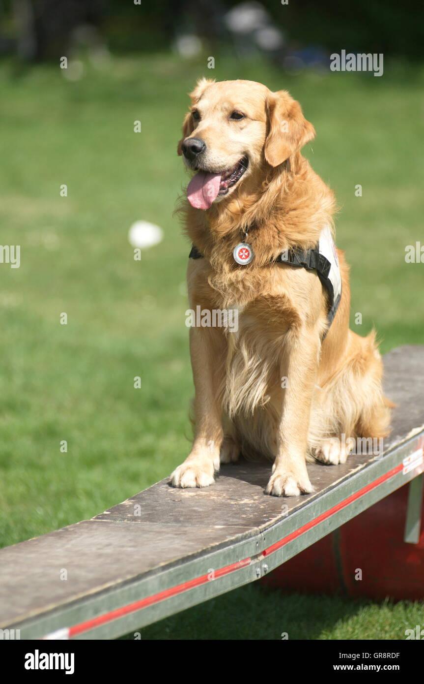 Rescue Dog - Stock Image