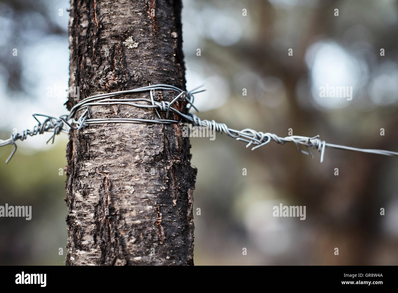 Wire Wrapped Stock Photos & Wire Wrapped Stock Images - Alamy