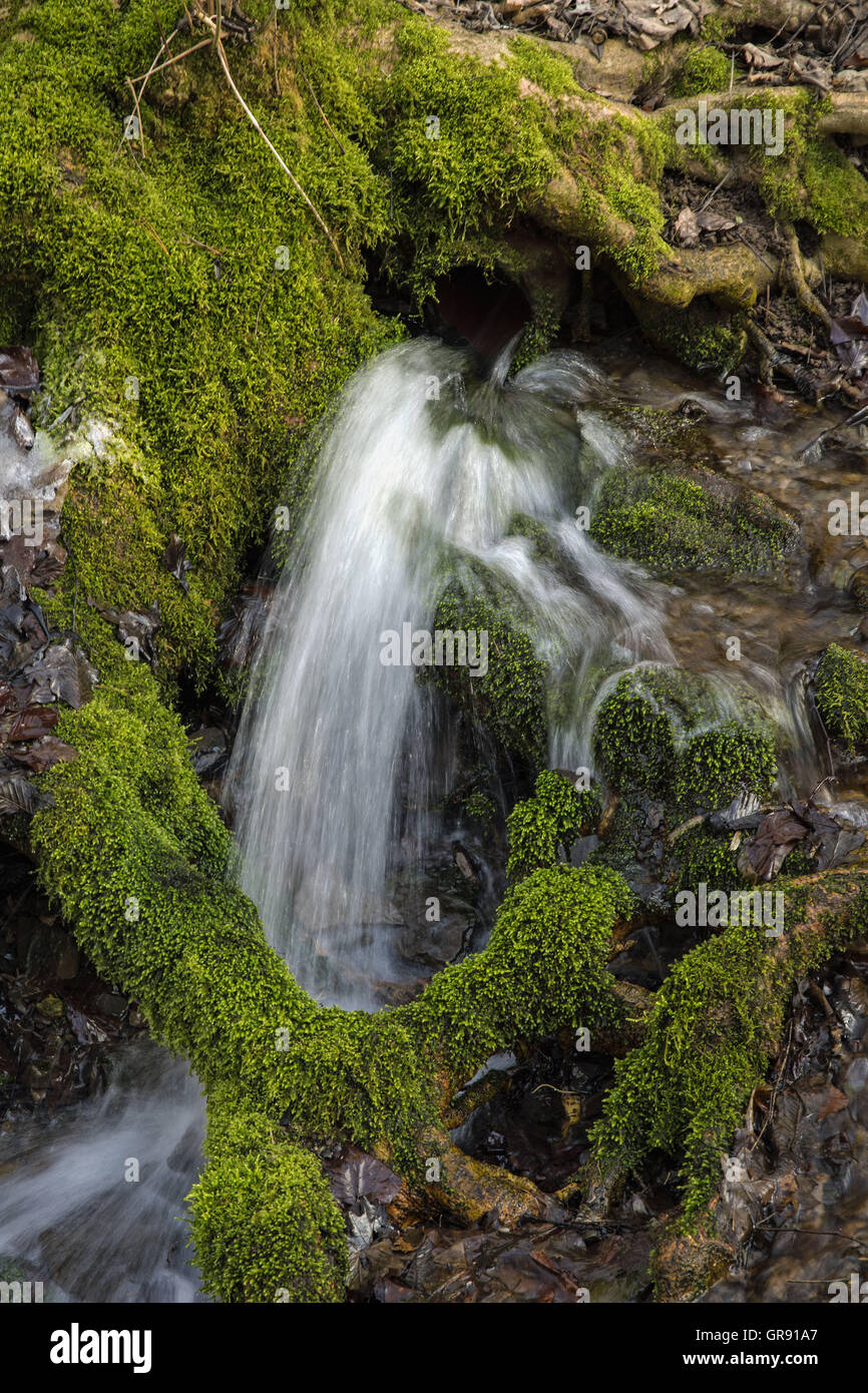 Small Forest Stream With Moss On The Side, Long Exposure - Stock Image