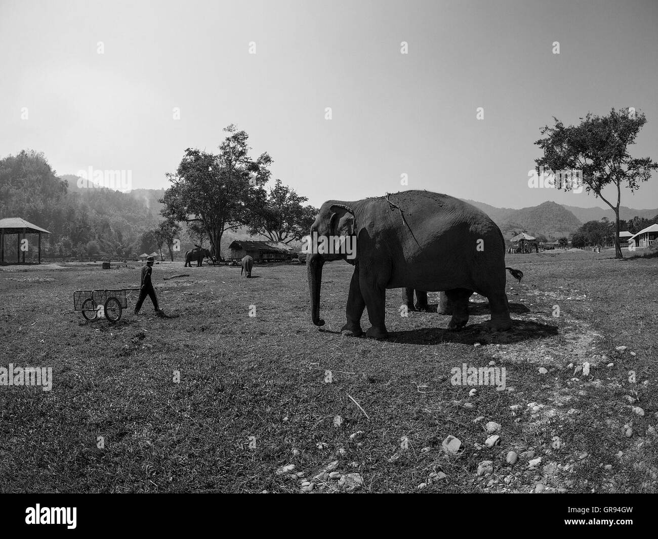 Elephants On Field Against Sky - Stock Image