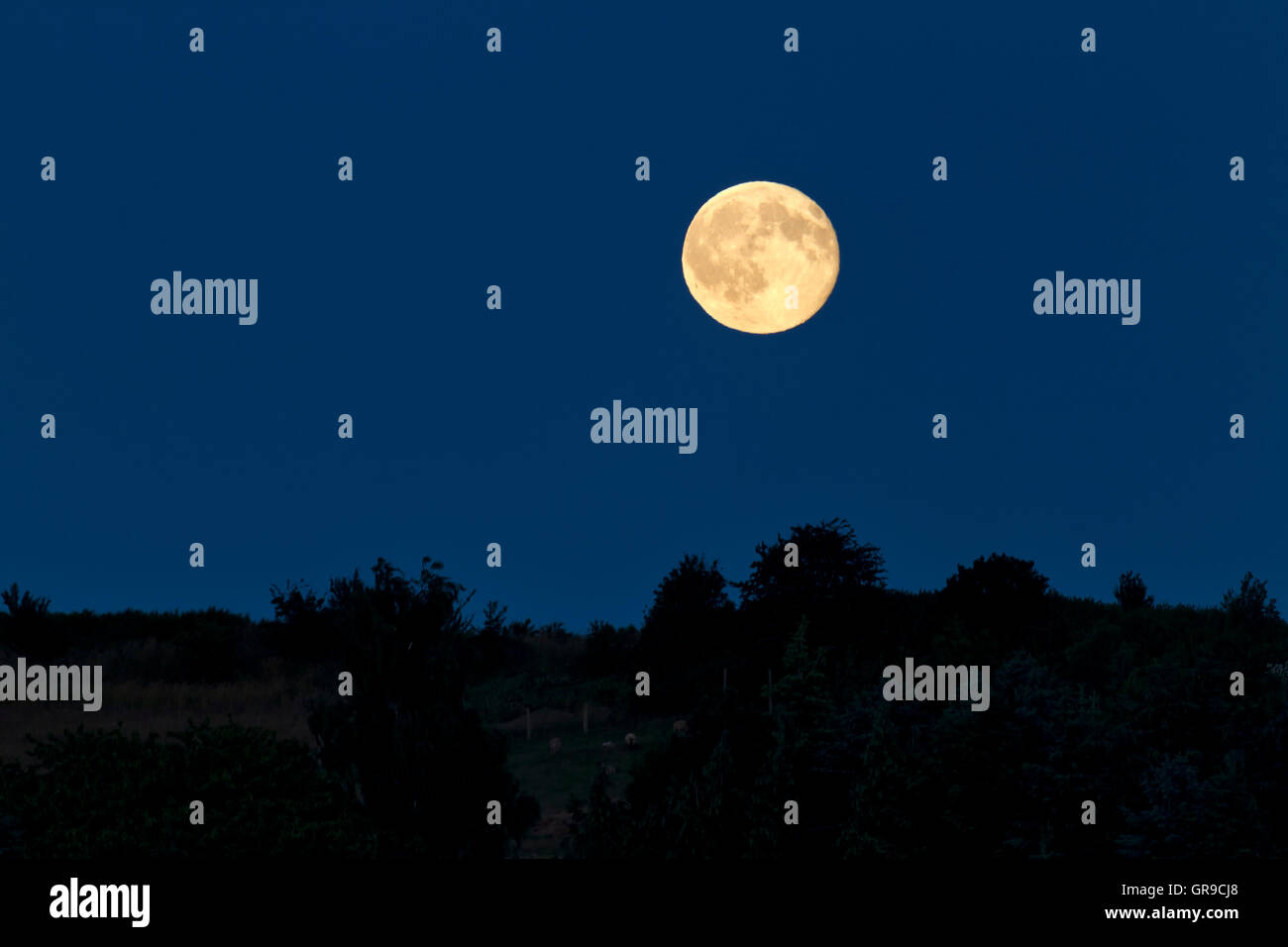 Full Moon Is Up In The Night - Stock Image