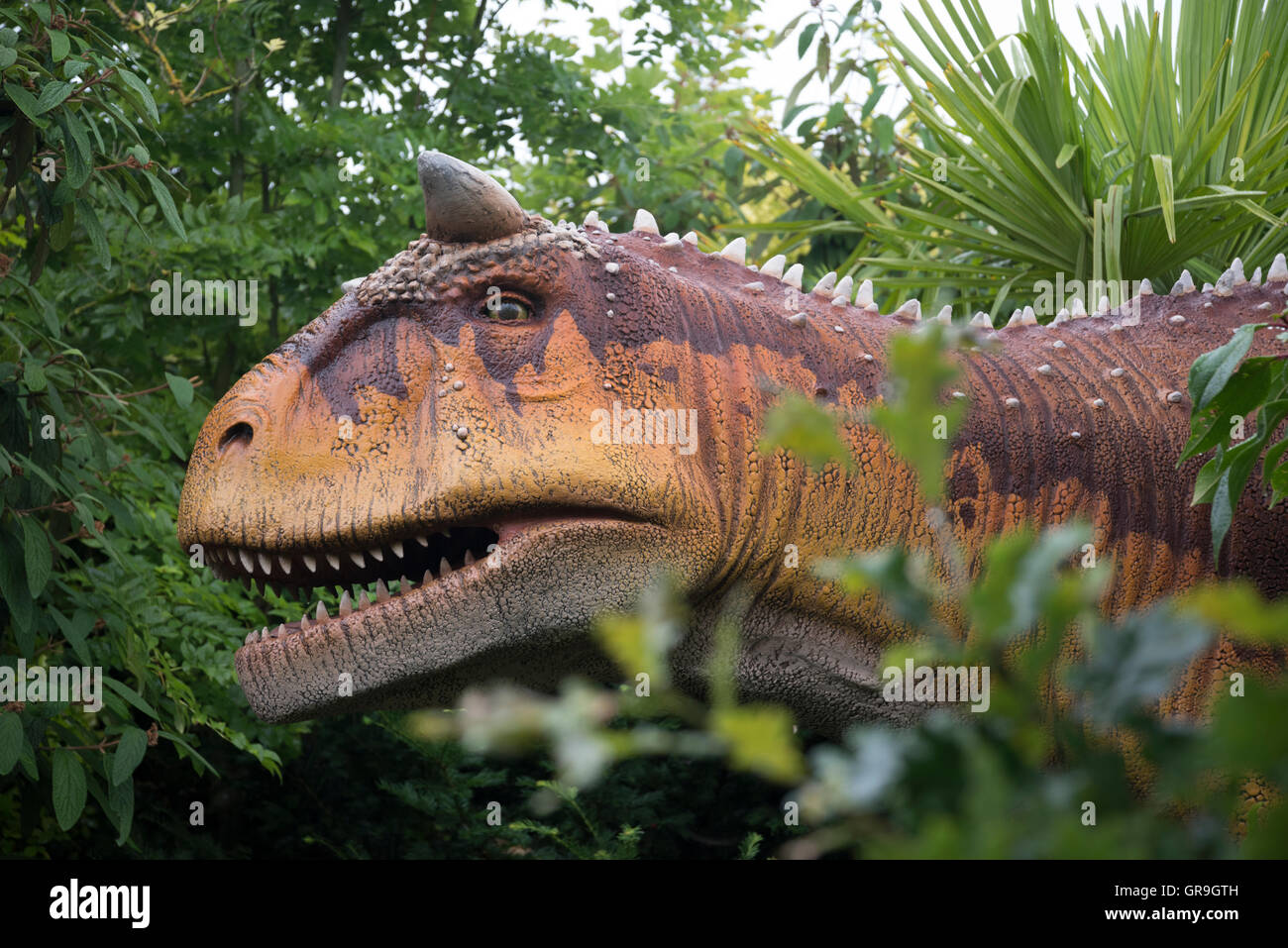 Carnotaurus dinosaur at Chester Zoo,  Cheshire, UK - Stock Image