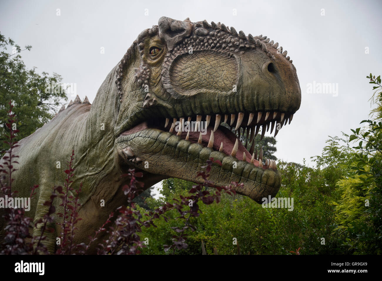 Gigantosaurus dinosaur at Chester Zoo,  Cheshire, UK - Stock Image